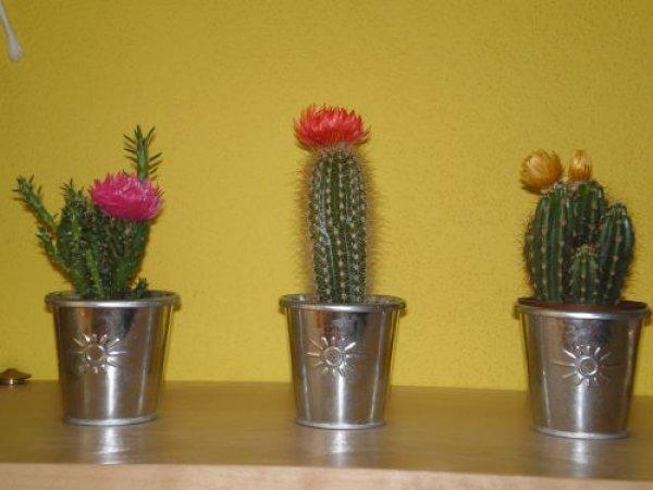 moje kaktusky
