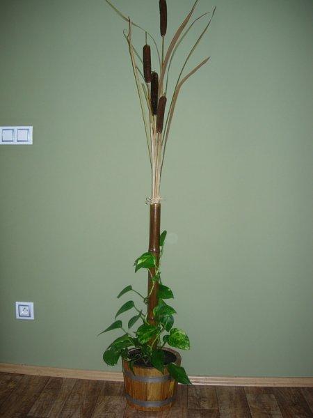 potos+bambus