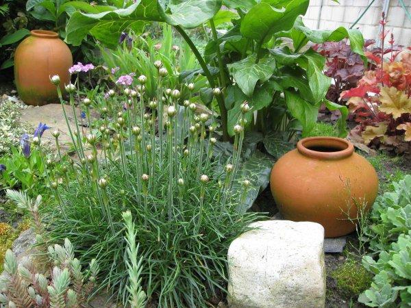 moje zahrada 1