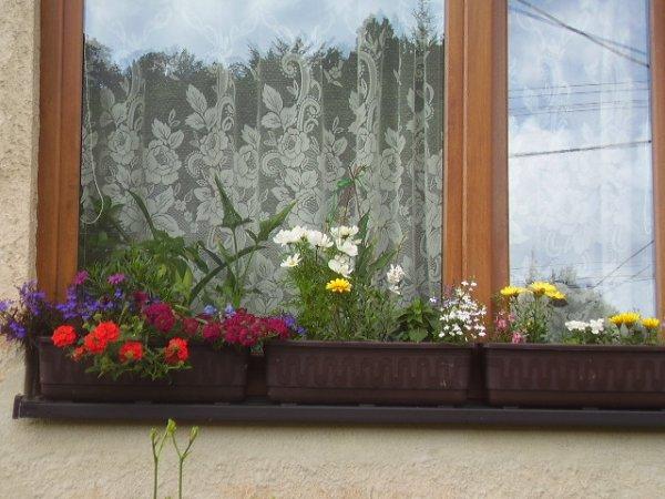 Truhlíky na okně