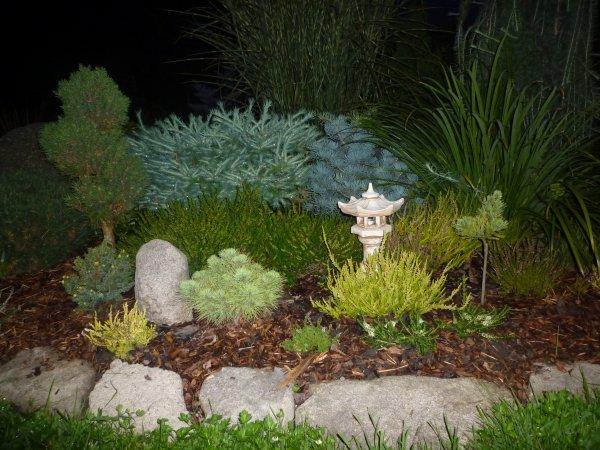 zahrada v noci