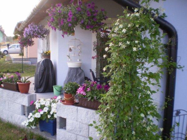 Zahrada na zdi