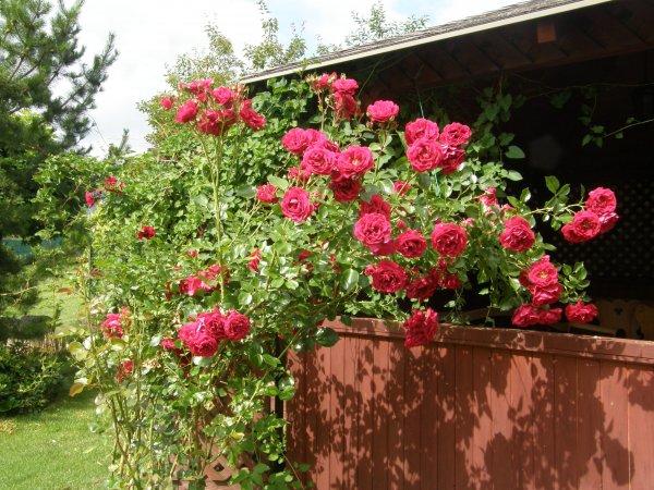 Ružičkový altánok