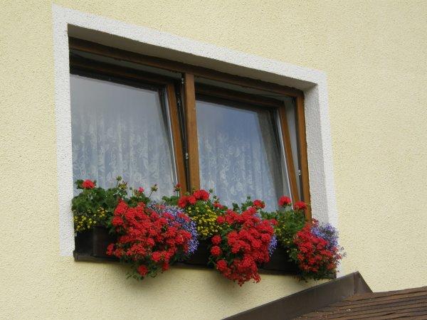 Letničky na okne