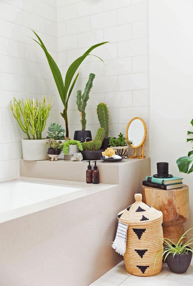 pokojové rostliny interiér