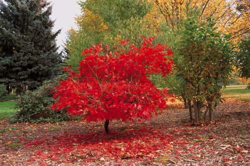 Než opadá listí