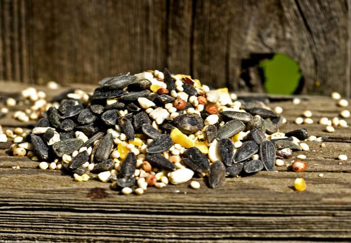 Jak správně uchovávat semena