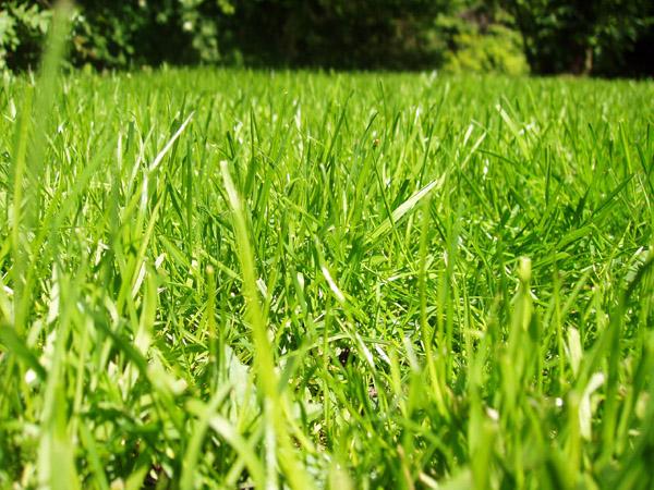 PODZIMNÍ ZAHRADA: 2.díl - Péče o trávník