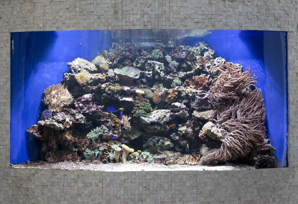 Nová éra akvaristiky