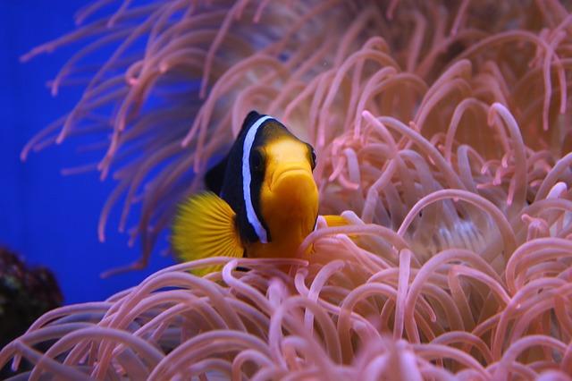 Pořiďte dětem za vysvědčení akvárium s rybičkami