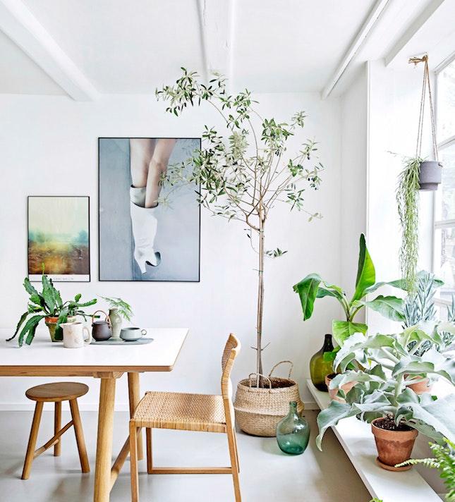 Pokojové květiny: Nová energie pro vaše bydlení