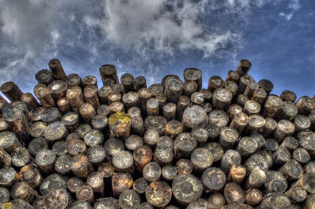 Kam se dřevem na zimu? Přeci do tepla a sucha