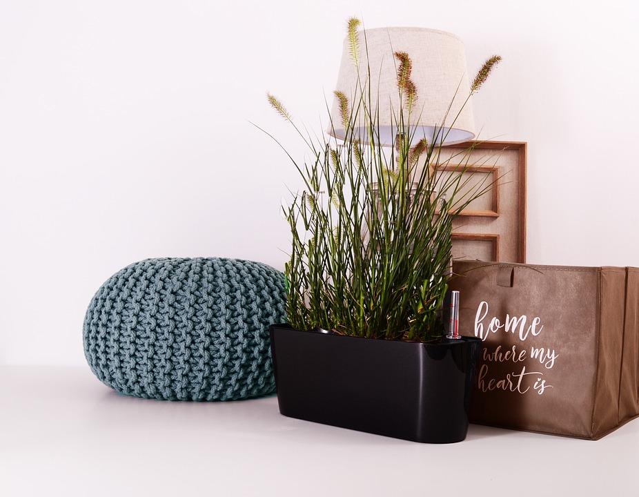 Jak uspořádat rostliny v interiéru podle Feng-šuej?