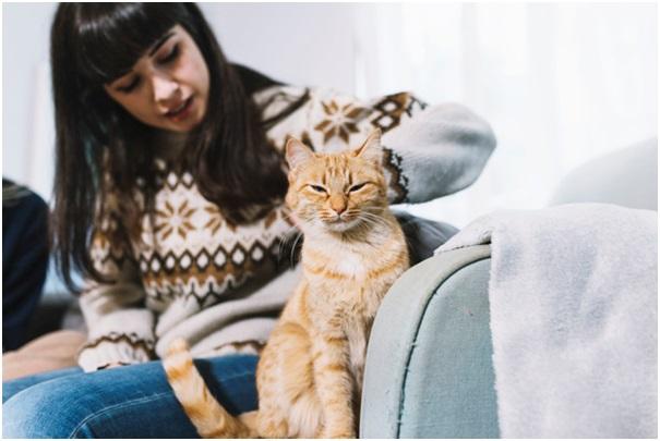 Ochraňte svůj nábytek se škrabadlem pro kočky
