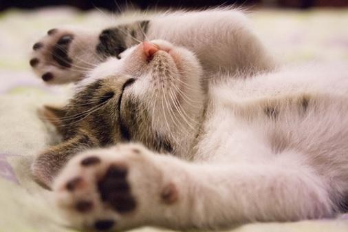 Přizpůsobení bytu pro kočku