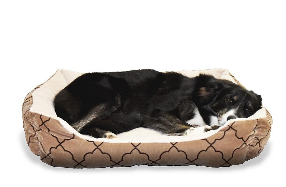 Aby byl pelíšek pro psa dokonalý
