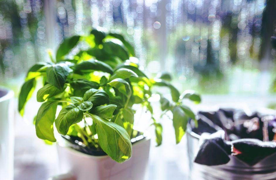 Nejlepší bylinky jsou ty domácí. Vypěstujte si ty svoje