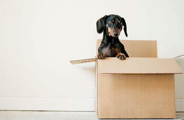 10 důvodů, proč využít služeb stěhovací firmy při stěhování