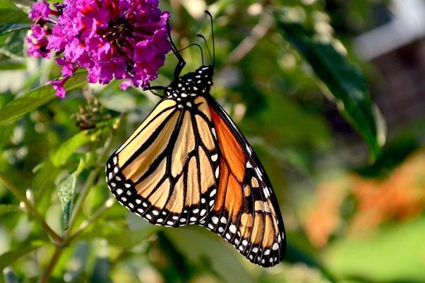 Včely a motýli v zahradě