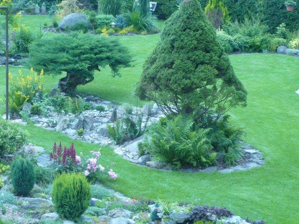 maxi bonsaje z roku 1976