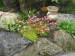 moje zahrada 2