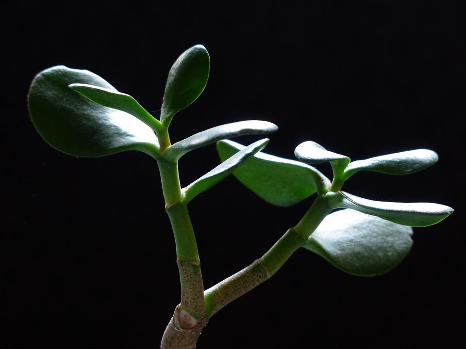 Rostliny v interiéru podle Feng-šuej